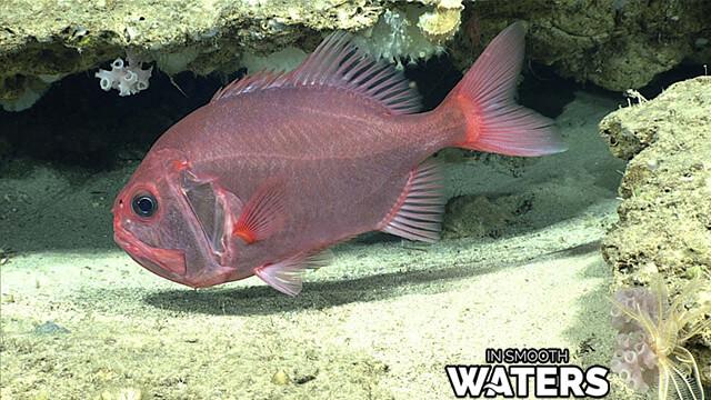 1 longest life span fish orange roughy