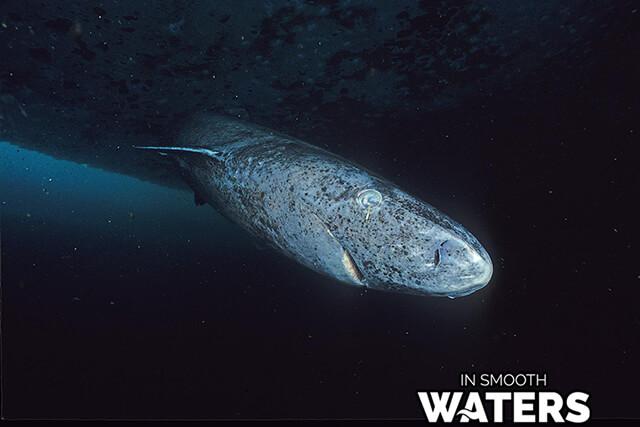 10 longest life span fish greenland shark