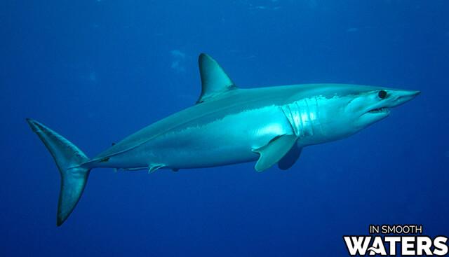 10 most qucik fish mako shark