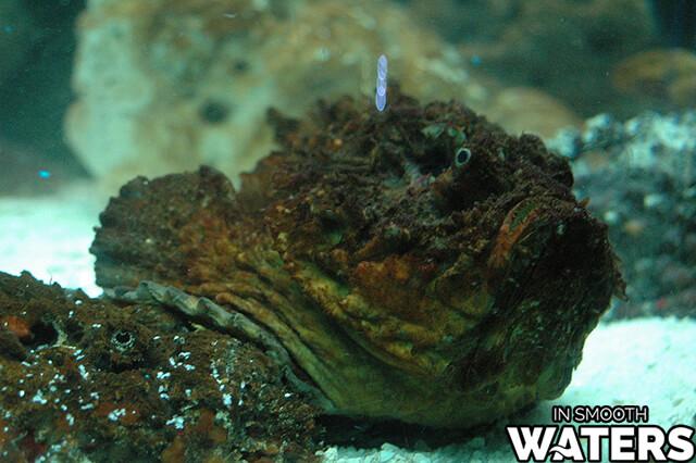 2 most dangrous ocean fish stonefish
