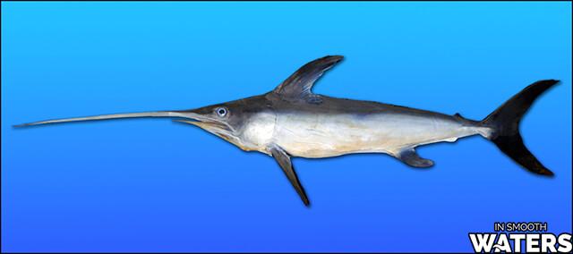 3 most quick fish swordfish