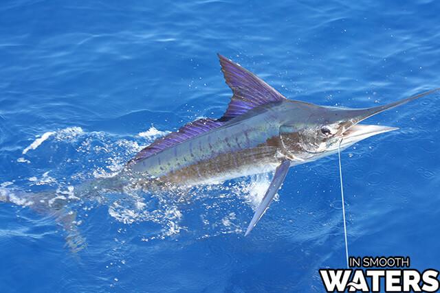 4 quickest fish stripe marlin