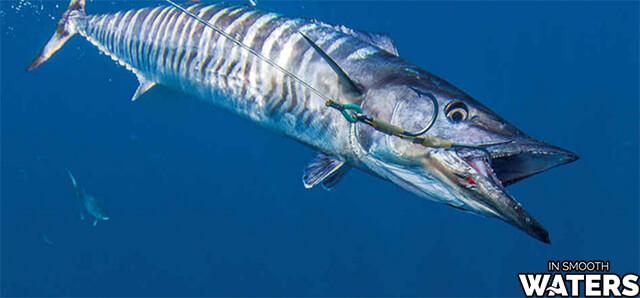 5 quickest fish wahoo fish 2