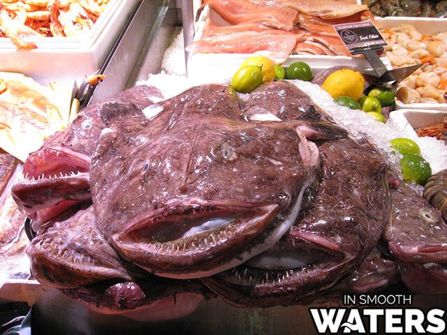 5 ugly fish monkfish