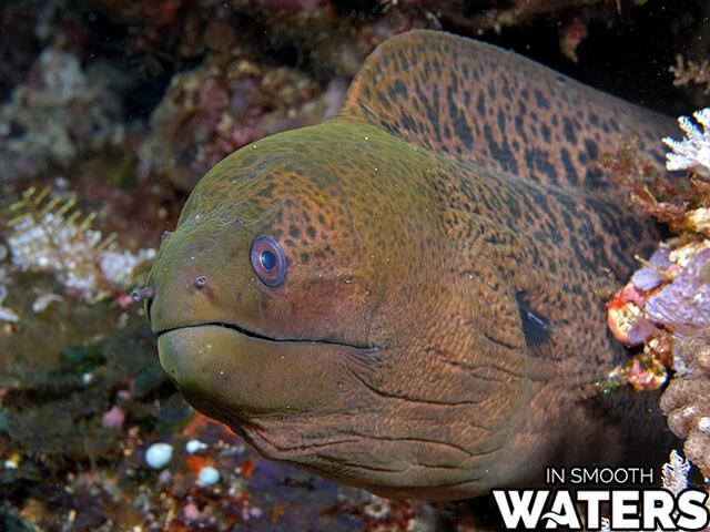 9 most dangrous ocean fish moray eel
